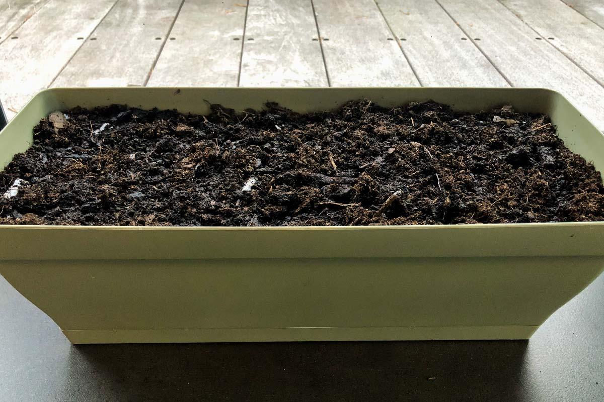Jour 1 De Notre Carte De Voeux Avec Des Graines De Fleurs Sauvages Plantée Dans Une Jardinière.