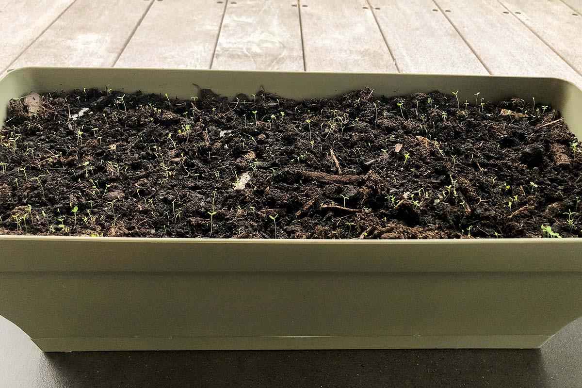 Jour 4 De Notre Carte De Voeux Avec Des Graines De Fleurs Sauvages Plantée Dans Une Jardinière.