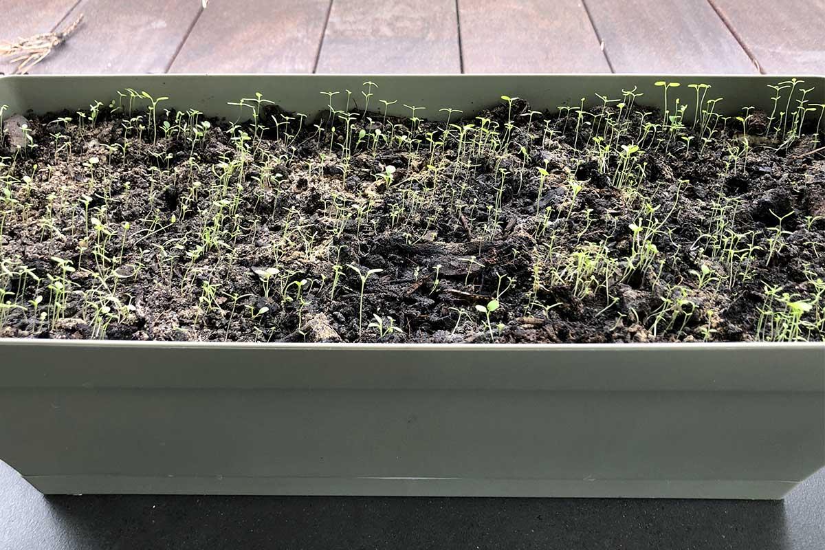 Jour 13 De Notre Carte De Voeux Avec Des Graines De Fleurs Sauvages Plantée Dans Une Jardinière.