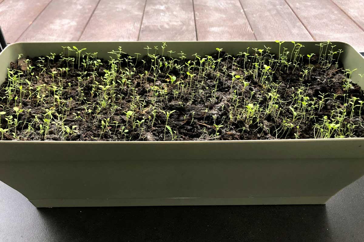 Jour 16 De Notre Carte De Voeux Avec Des Graines De Fleurs Sauvages Plantée Dans Une Jardinière.